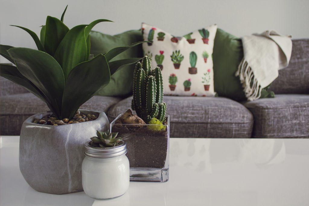 Canapé cactus