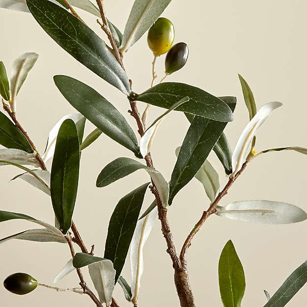 Decologia - olivier écolo